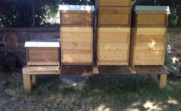Bienenvölker in Liebig Zander Zargen